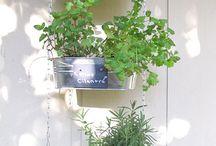 DIY: Gardening / by Rachael A