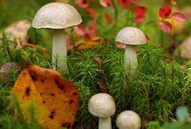 Shroomery / Mushrooms! / by Stefani