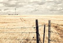 Gates and Fences / by Jody Thompson