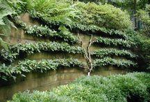 E S P A L I E R  / Espalier is the technique of training plants to grow in a formal pattern along a flat wall or garden trellis.   / by Helen Weis