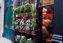 my dream flower shop  / by Sammie Clark