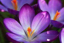 "Flowers, Plants & Leaves: Horticultural ❀ ~ Flores, Plantas & Hojas: Horticultura ❀ / ""I'd rather have roses on my table than diamonds on my neck."" ~Emma Goldman / ""Prefiero tener rosas en mi mesa que diamantes en mi cuello."" ~Emma Goldman  / by Irene Niehorster"