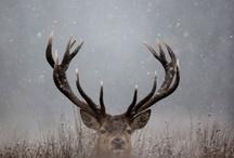 Animal Kingdom / by Dawn Mead