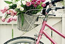 Biking. Sports. / by Emese Szabo