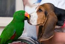 I love pets / by Dragica Juzbasic