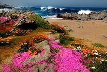 ~BEACHY~#1 / by Diane Harris-Day