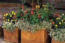 Container Gardens / For flowers, vegetables, and fruit.  / by Marilyn Osborne