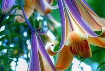 Gods Beautiful Flowers! / by Sandra Hudson-Conway