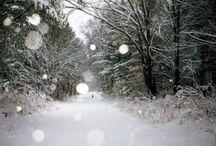 Winter Wonderland / by Christmas Tree Market