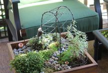 Zen or Fairy Gardens / by Barbara Harris