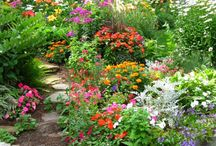 Gardens  (from pots to plots) / by Barbara DeGruy