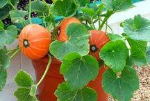 Gardening / by Sonia Ramirez