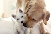 Animals!!!! / by Melissa Sigman Shreve