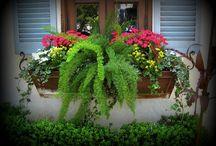 Flower box ideas / by Pam Tobias