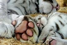 Paws! / by PrideRock Wildlife Refuge