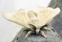 lepidoptera / by motheaten
