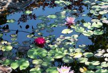 Flowers / by Stacy Dostal