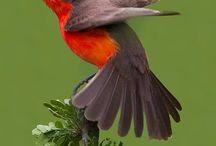 BIRDS / by Annette Kent