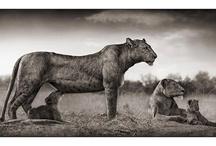 Animals / by Kim Curren