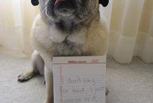 Dog Shaming <3 / Lol! I love dog shaming.  / by Hilary Tumey