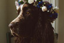 Dogs in flower headbands / by Nancy Schober