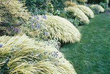 Gardening Ideas / by Debbie B.