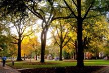 University of South Carolina  / by Tonia Garbutt