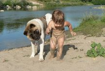 Akitas / Thank you for sharing your pins and thank you for repinning!  Repin as many as you want.  Spreading the word about the wonderfulness of akitas. / by Tamara Llanes