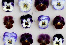 PLANTS / by Amanda Kristen