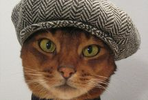 Cat Lady Things / Tabbies, calicos, ragdolls and more. Cute cats in jaunty caps!  Stuff for cat ladies.  / by makeupandbeautyblog