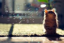 Cats / by Katia Thienpondt
