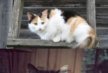 CATS / by Hannah Neumeyer
