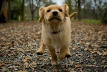 Puppy Love / by Michaela Leimkuehler