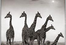 Animals / by Jenny Worthington