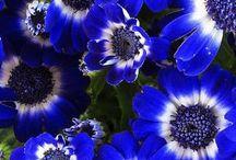 TRUE BLUE ! / by Robin Keister