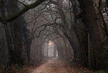 Amazing Photography / Great photos, photo ideas... / by Cari Lomas