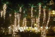 Christmas in Key West / by Lucy Burdette