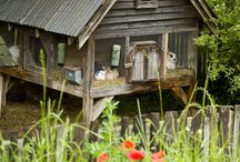 Rabbit hutches and care / by Tiffany Nofziger