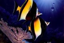regular sea fish / by Sydney Vegezzi