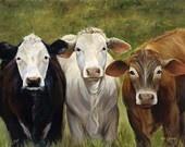 Cows / by Tasha Jackson Wright