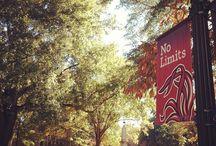 THE USC / University of South Carolina / by Valarie Cole