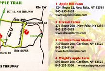 All Things Apple! / Hudson Valley Apple Picking Guide: Pick Your Own Orchards, Hudson Valley Apple Trail, Apple Recipes, Cocktails, and Baked Goods / by Hudson Valley Magazine