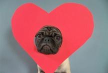 Valentine's Love / by Jessica Ellis