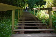 Steps of Marin County / Towns of Marin were made to walk- and steps were are part of getting around Marin hills and marshlands- and many are still there and being used today! / by MarinVacation California
