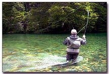 Fly Fishing, One of my Passions / by Ted Dziedzic