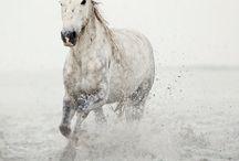 Horses / by Fauzi C