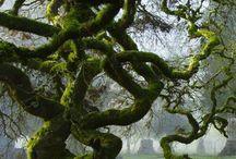 Trees / by Karin Caspar