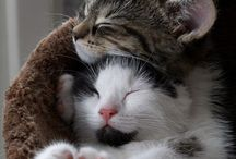 Cutest <3 / Adorable animals! / by Yuliana Krylova