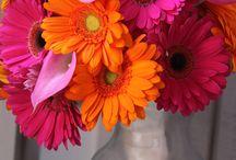 flowers and gardens  / by Paula Nitschke