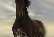 """Beautiful Horses / by Cynthia """"Cindy"""" Brown"""